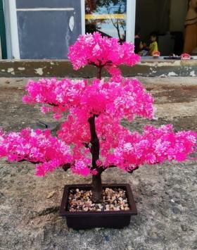 Bunga Sakura Warna Pink Sangat Indah Harga Murah