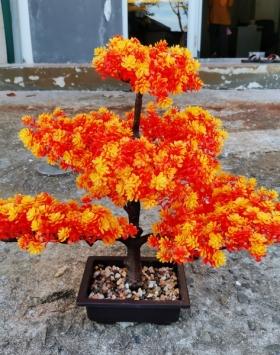 Pohon Sakura Orange Sangat Indah Harga Murah