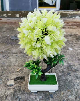 Tanaman Hias Pohon Bunga Abadi Anti Air