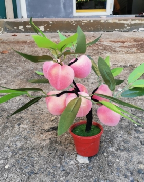 Hiasan Bonsai Buah Apel Indah Buat Kantor dan Rumah