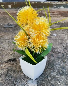 Bunga Hias Marigold Kuning