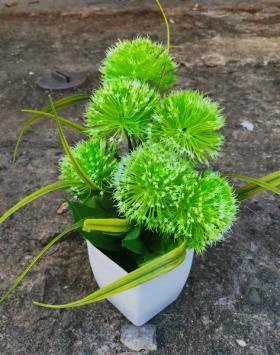 Bunga Hias Marigold Hijau