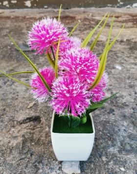Bunga Hias Marigold Merah Muda