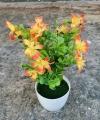 Bunga Summer Daisy Dua Warna