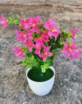 Bunga Summer Daisy Merah Muda