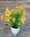 Bunga Summer Daisy Kuning