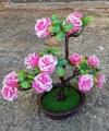 Pohon Hiasan Bonsai Bunga Mawar Pink